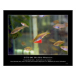 Los pescados de Swordtail como éstos son parte… -  Impresiones