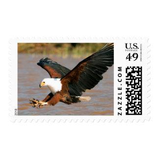 Los pescados Eagle africanos (Haliaeetus Vocifer) Franqueo