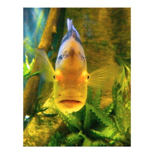 Los pescados que se preguntan plantilla de membrete