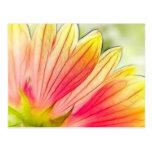 Los pétalos de la flor combinada se cierran para a tarjeta postal