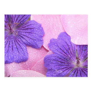 Los pétalos rosados apacibles mezclan el rocío púr tarjetas postales