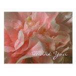 Los pétalos rosados de la camelia le agradecen pos tarjetas postales
