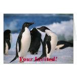 ¡Los pingüinos de Adelie, le invitan! Tarjeta De Felicitación