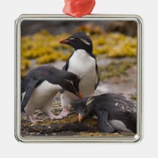 Los pingüinos de Rockhopper comunican con uno a Ornatos