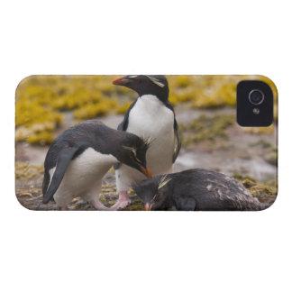 Los pingüinos de Rockhopper comunican con uno a iPhone 4 Coberturas