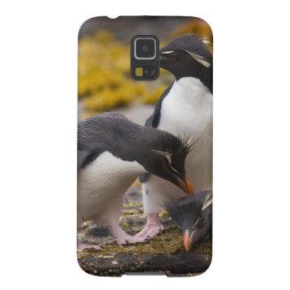 Los pingüinos de Rockhopper comunican con uno a Carcasas Para Galaxy S5