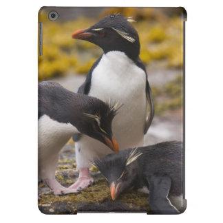 Los pingüinos de Rockhopper comunican con uno a