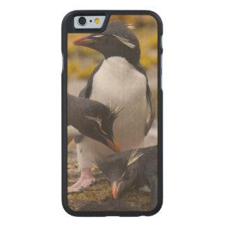 Los pingüinos de Rockhopper comunican con uno a Funda De iPhone 6 Carved® De Arce