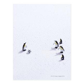 Los pingüinos que juegan a fútbol tarjeta postal