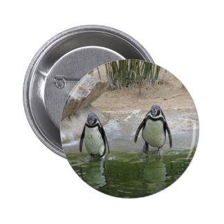 Los pingüinos van para una nadada