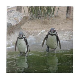 Los pingüinos van para una nadada teja