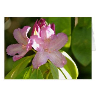 Los Poblanos flower Card