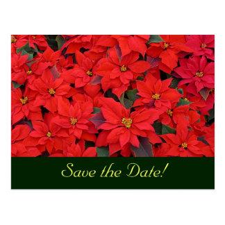 Los Poinsettias rojos ahorran la postal de la fech