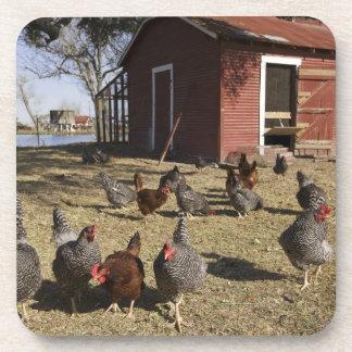 Los pollos que trabajan los argumentos acercan a l posavasos de bebidas