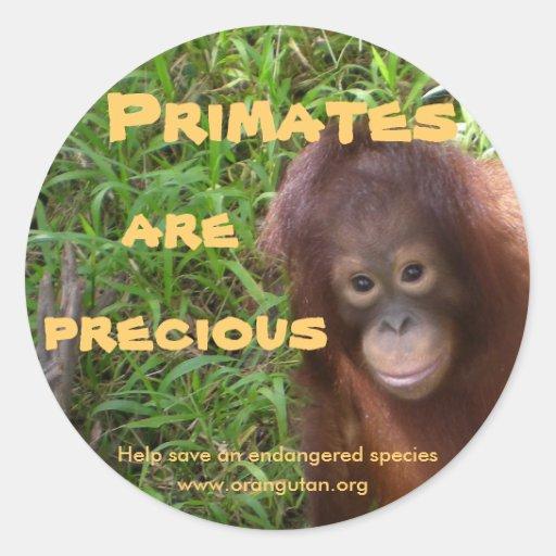 Los primates son preciosos etiquetas redondas