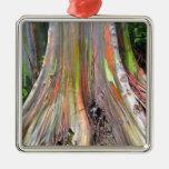 Los productos del árbol de eucalipto del arco iris ornato