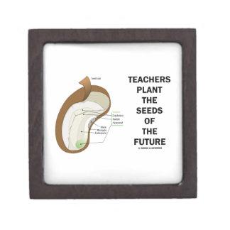 Los profesores plantan las semillas del futuro (la cajas de regalo de calidad