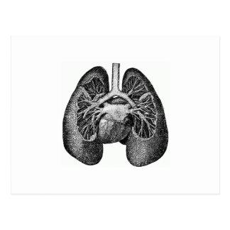 Los pulmones y el corazón postal