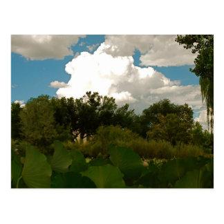 Los Ranchos, NM Postcard