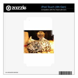 Los regalos del pollo de la gallina clueca skins para iPod touch 4G