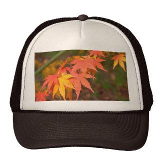 Los regalos en caída colorean productos múltiples gorras de camionero