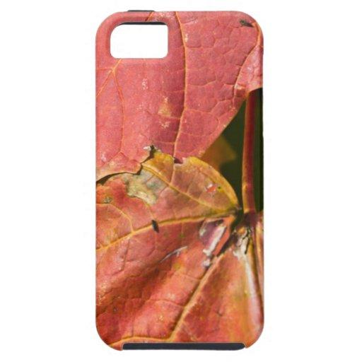 Los rojos de la caída iPhone 5 Case-Mate protector