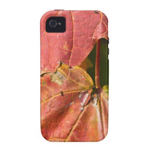 Los rojos de la caída Case-Mate iPhone 4 carcasa