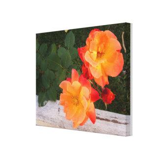 Los rosas anaranjados envolvieron la lona impresiones de lienzo