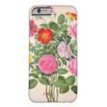 Los rosas, platean 4 del Florilegium de Nassau Funda De iPhone 6 Barely There