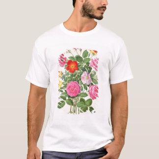 Los rosas, platean 4 del Florilegium de Nassau Playera