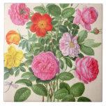 Los rosas, platean 4 del Florilegium de Nassau (w/ Teja