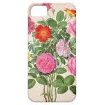 Los rosas, platean 4 del Florilegium de Nassau (w/ iPhone 5 Case-Mate Carcasa