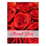 Los rosas rojos hermosos le agradecen tarjetas postales