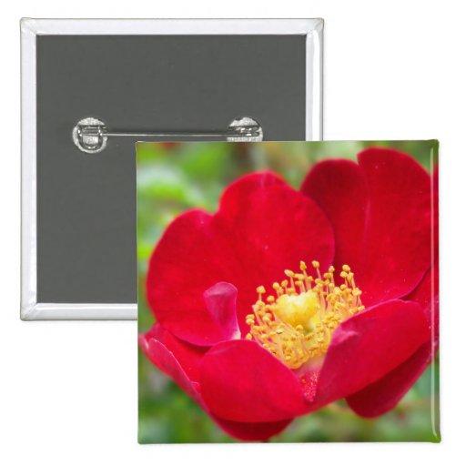 Los rosas son botón rojo pin cuadrado