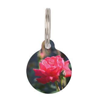 Los rosas son flor de estado de NY Identificador Para Mascotas