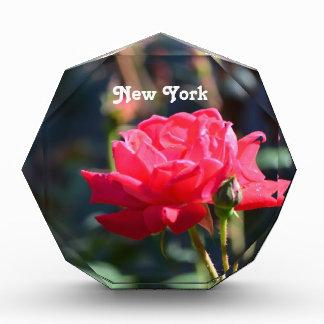 Los rosas son flor de estado de NY