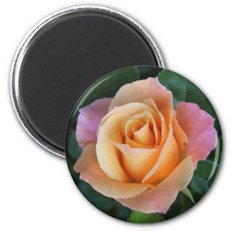 ¡Los rosas son rojos a menos que sean melocotón! Imán Redondo 5 Cm
