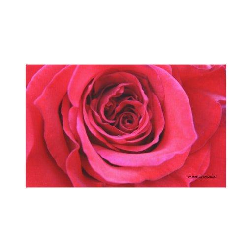 Los rosas son rojos lienzo envuelto para galerias