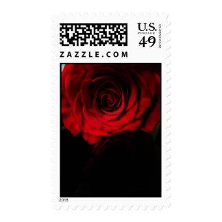 Los rosas son rojos… envio