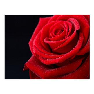 Los rosas son rojos postales