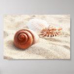 Los seashells en el cierre de la arena para arriba poster