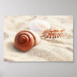 Los seashells en el cierre de la arena para arriba póster