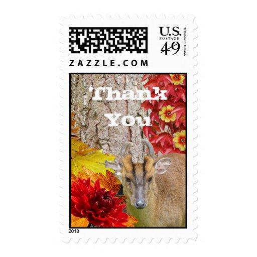 Los sellos le agradecen caída del bosque del país
