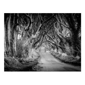 Los setos de la oscuridad en Black&White Tarjetas Postales