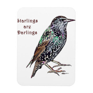 Los Starlings son queridos Imanes
