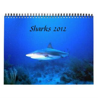 Los tiburones hacen calendarios 2012
