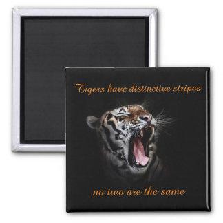 Los tigres tienen imán distintivo de las rayas