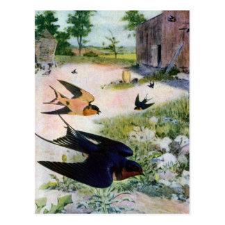 Los tragos de granero vuelan alrededor de tarjeta postal