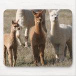 Los tres amigos, Alpaca-Estilo Mousepads