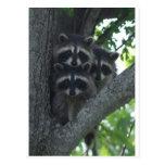 Los tres amigos tarjeta postal